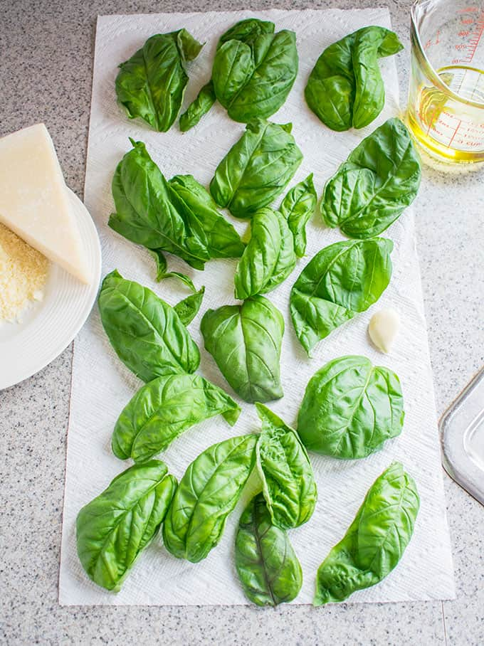 Photo of basil leaves, grated Parmesan, triangle of Pecorino Romano, garlic clove and olive oil in a meausuring cup - ingredients for Mom's Pesto with Pecorino Romano
