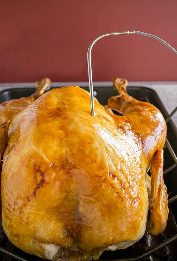 Photo of roasted Thanksgiving turkey in pan with temperature probe inserted